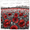 A Field Full of Poppies