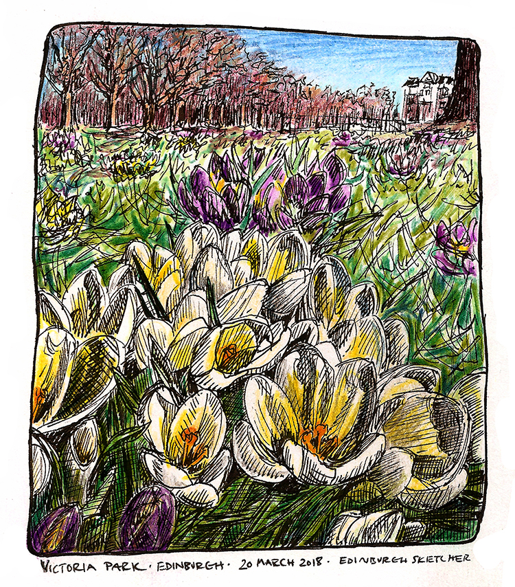 Crocuses in Victoria Park